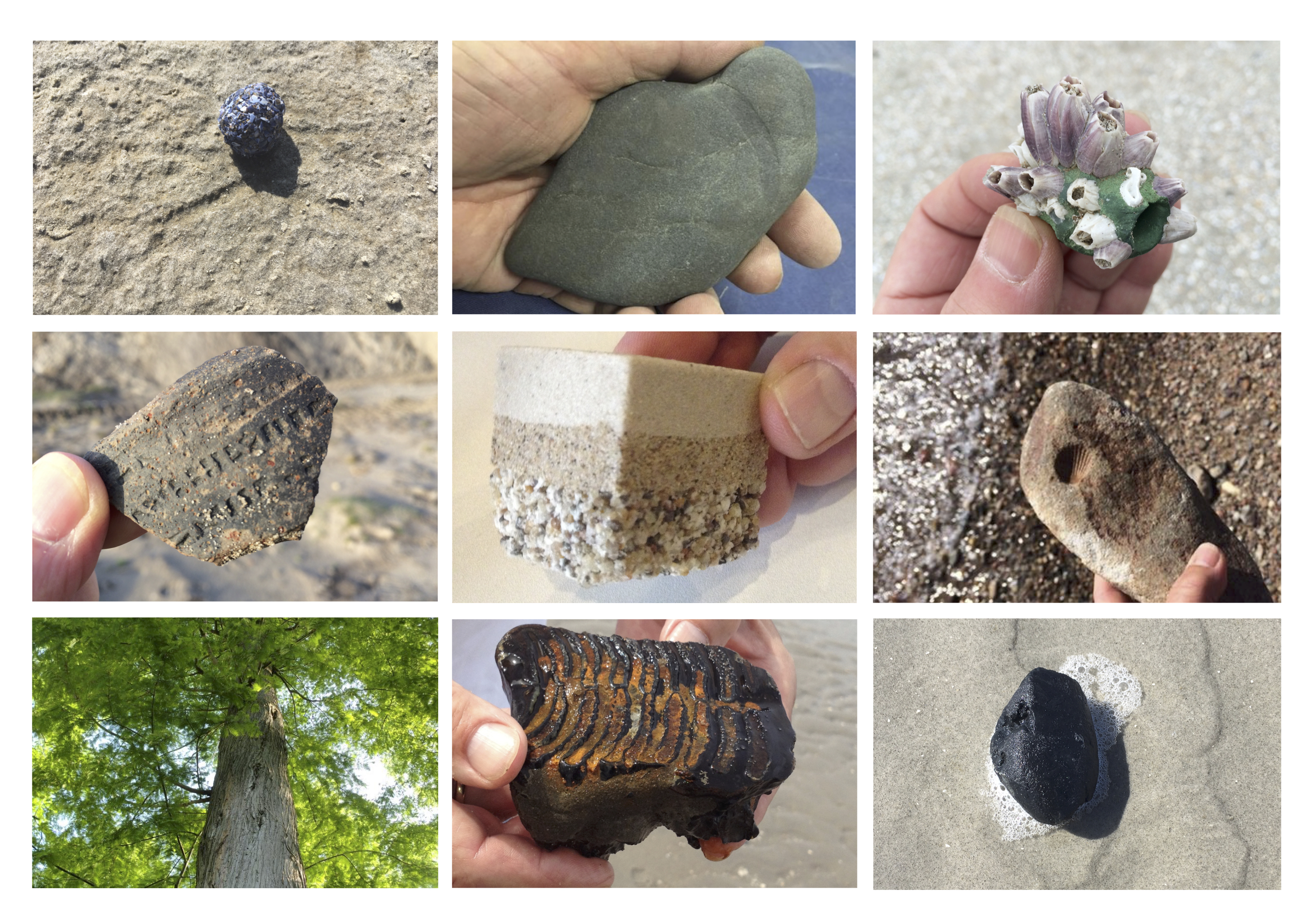 Images: Personal reference collection of fossils and/or artifacts.  Photos: Jacqueline Heerema.