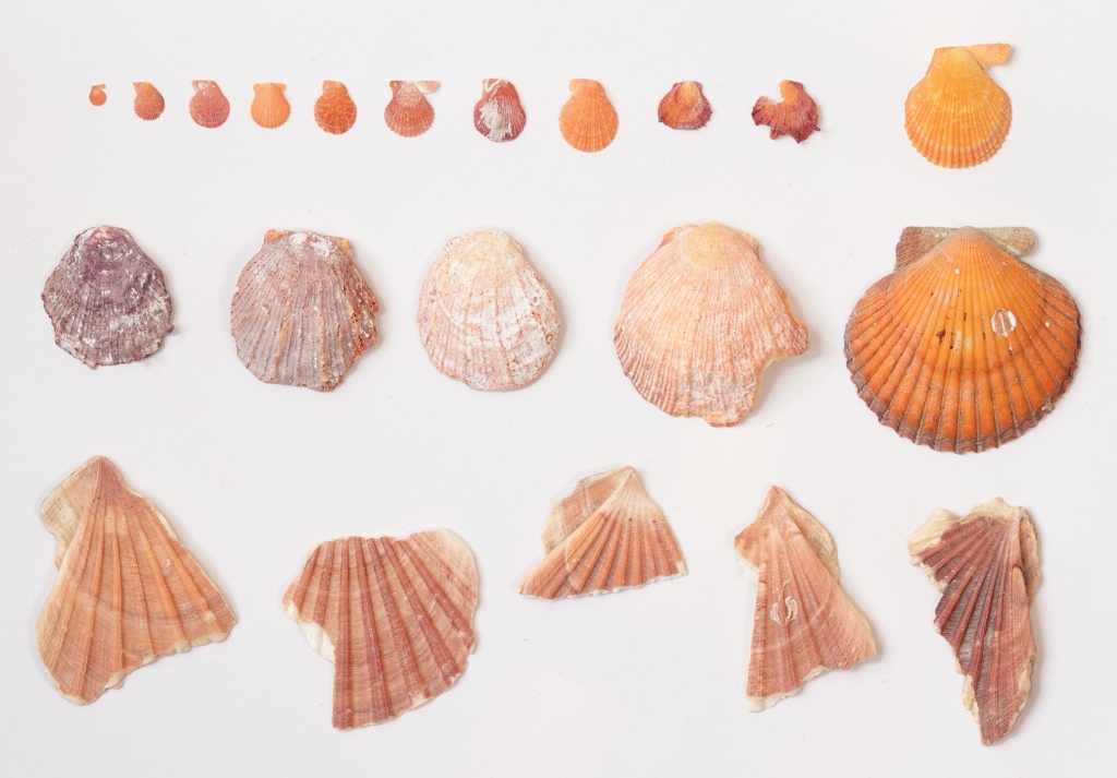 Colour. Found at Praia da Luz, Portugal in 2020; Jersey Island, UK 1997; Mediterranean Sea, 2016; Yucatan, Mexico 2005: Palavas, France 2004; Cabo de Gata, Spain 2020; Noirmoutier, France 2009; Yucatan, Mexico 2005; Cabo de Gata, Spain 2020; Nieuwpoort-Westende, Belgium 2005. Image date: 2020. Photo: Jacqueline Heerema.